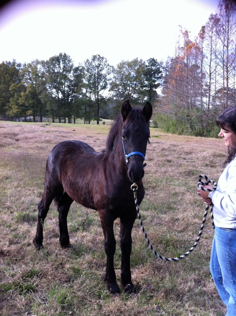 This is a filly from Margie: Hotsje